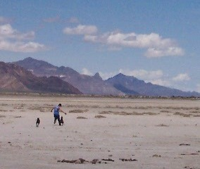 Bonneville Salt Flats, Dogs at play, May 2005