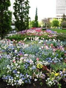 Flowers in Temple Square SLC